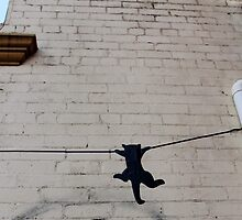 Cat on a Wire by Janie. D