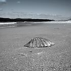 Shell - Marion Bay Tasmania by Nigel Butfield