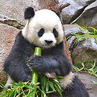San Diego Zoo by Ellen Rosen Singer