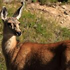 Deer At Rocky Mountain National Park by leftwinger7