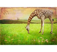 Just Grazing Photographic Print