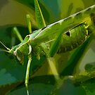 Spicy Green Grasshopper by Kelly Gibson