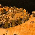 Golden Angels Of Bryce Canyon by Greg Summers