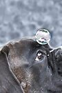 Bubble On My Head -Boxer Dog Series-  by Evita