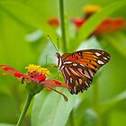 Wild Monarch Butterfly by Dean Cunningham