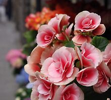 Flowers in Florence by Hollyis