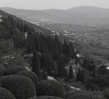 Fiesole by Hollyis