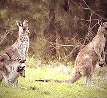 The Kangaroo Family by yolanda