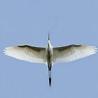 Egret Flyover by Jim Cumming