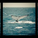 Whale Tail Triptych by ElRobbo
