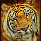 The Tiger by Heather Haderly