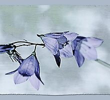 Beautiful Blue Bell by Vickie Emms