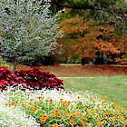 Autumn Garden by NatureGreeting Cards ©ccwri