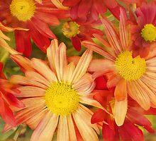 summer brights by Teresa Pople