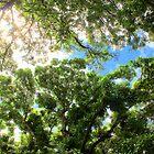 Waihe'e Sky by karolina