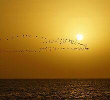The sea, the bird's flight against a decline by mski