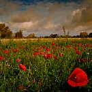 Poppy Field by ajgosling