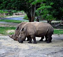 Rhinoceros in the wild. by FER737NG