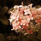 Secrets in Sepia by Erica Yanina Lujan