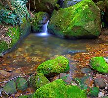 Megalong Valley Shoot by Bezman