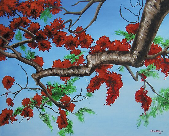 In the Branches of the Royal Poinciana by Juan Alcantara