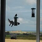 Bird Feeders, Whitby by dougie1page3