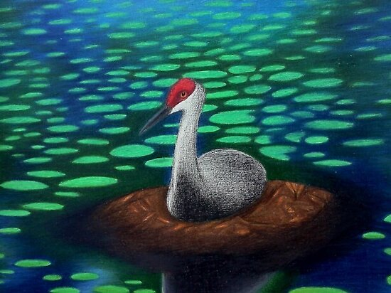 Closeup of Sandhill Crane (Comission) by SavannahStone