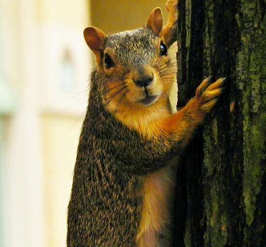 Squirrel Pose by Atheum
