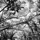 Waihe'e Jungle by karolina