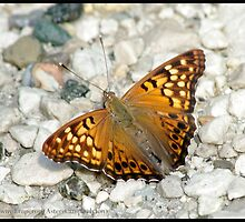 Tawny Emperor... by pieceoflace