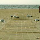 bird beach by Phlite