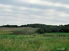 Out on the Countryside by Barberelli