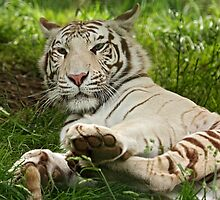 Talk to the Paw! by Mark Hughes