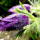 Paschal Flower Tears by RevJoc