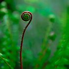 Fancy Fiddlehead by j Kirk Photography                      Kirk Friederich