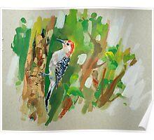 bird-11 Poster