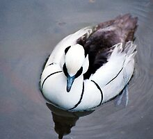 Duck - Black and White - NYC -  4-11 by denisespictures