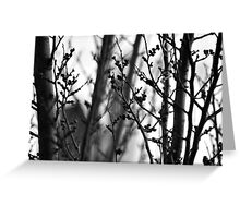 Through branches. Greeting Card