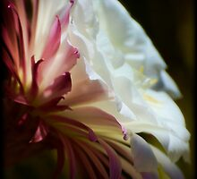 The Beauty Within by Saija  Lehtonen