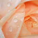 Raindrops on Roses #4 by Sea-Change
