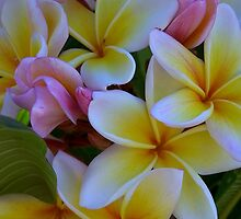 Fruit Salad Frangipani - Nice n Sweet by jono johnson