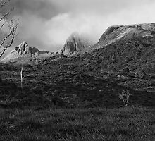 buttongrass,cradle mtn sunrise by Kip Nunn