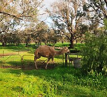 On The Farm by HG. QualityPhotography