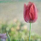 Une Tulipe by Lynda Heins