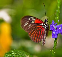 USA. Seattle. At the Pacific Science Center. Butterfly. by vadim19