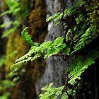 Detail Cliff Ferns by Ken Hill