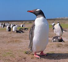 Gentoo penguin by leksele