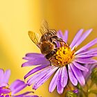 HONEY BEE by Sandy Stewart