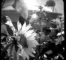 TTV Sunflower BW by lagrangepoint6