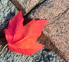Fallen Maple Leaf on Granite Boulder by Kenneth Keifer